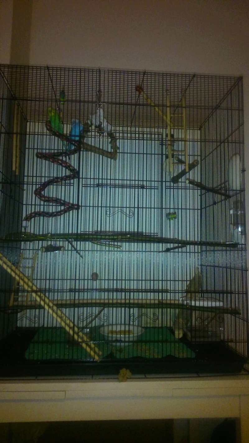 La cage des piouspious A11