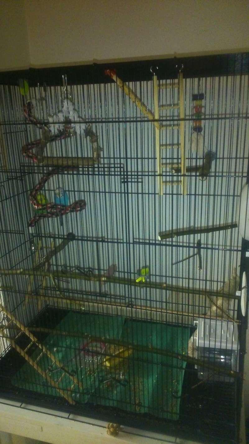 La cage des piouspious B11