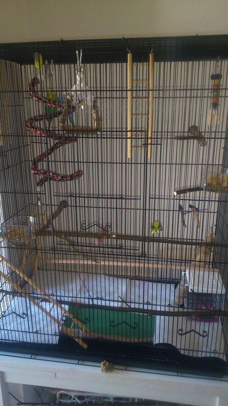 La cage des piouspious Dsc_0010