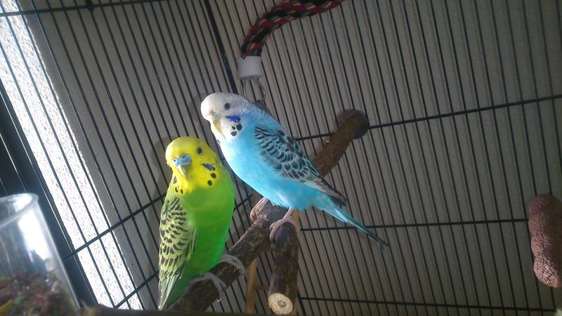 Fifi et Fifi2 :) Dsc_0011