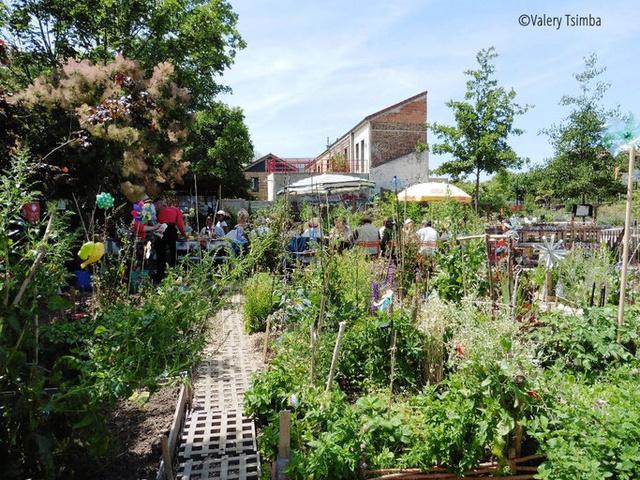 Jardin partagé  Chataeau du Loir à Coubevoie (92400) Jardin11