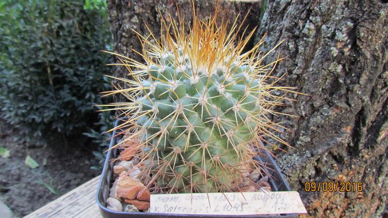 Cacti on logs. M_apoz12