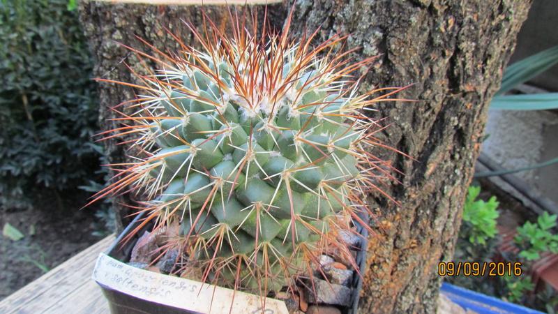 Cacti on logs. M_apoz13