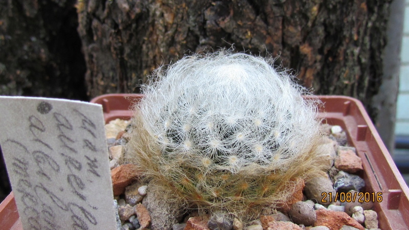 Cacti on logs. M_aure10