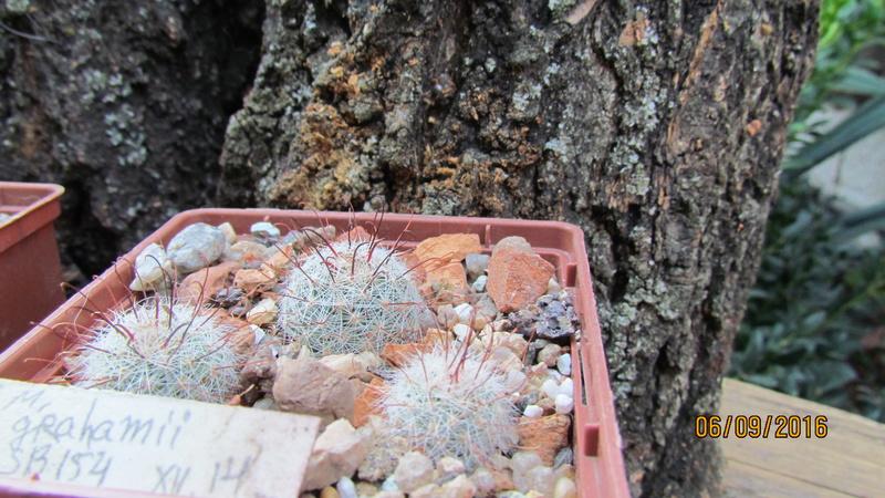 Cacti on logs. 4 M_grah10