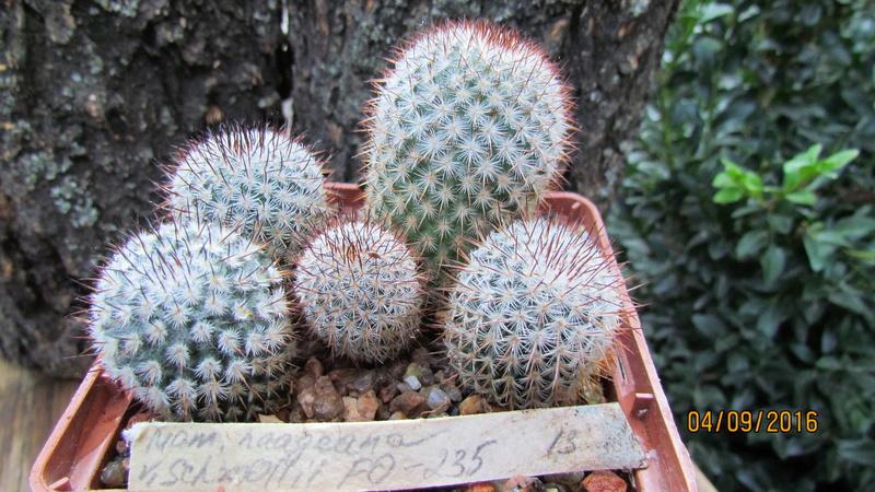 Cacti on logs. 4 M_haag10