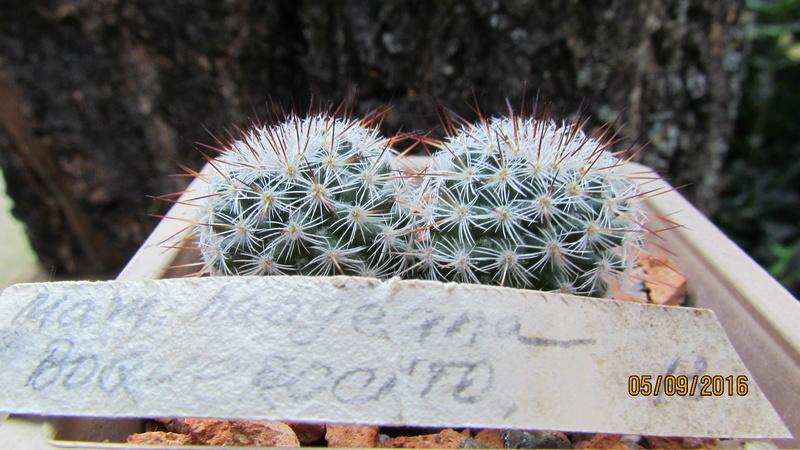 Cacti on logs. 4 M_haag11