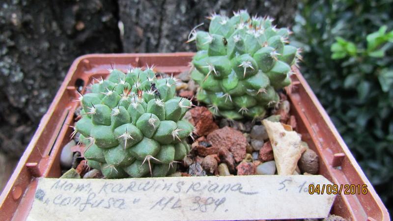 Cacti on logs. 4 M_karw10