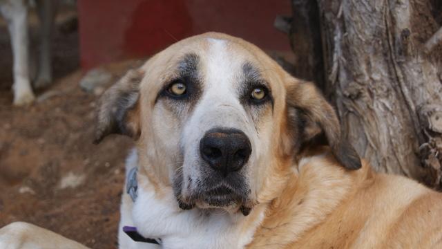 Canis Thor(Gedeeltelijke adoptie) Dsc01210