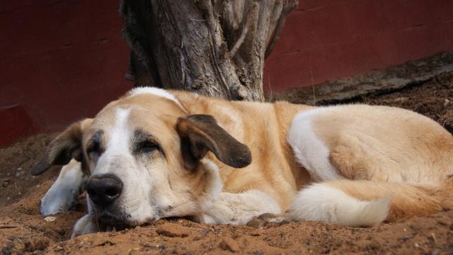 Canis Thor(Gedeeltelijke adoptie) Dsc01212