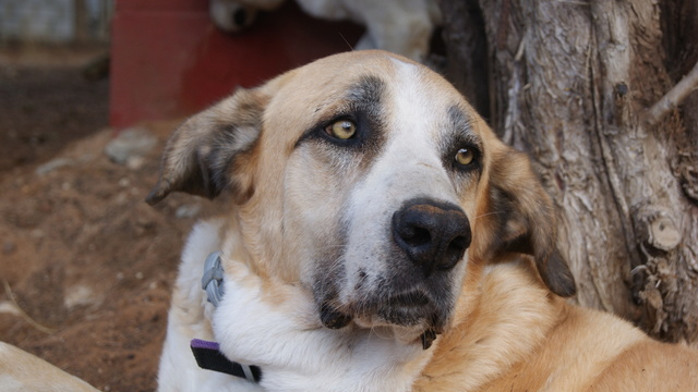 Canis Thor(Gedeeltelijke adoptie) Dsc01213