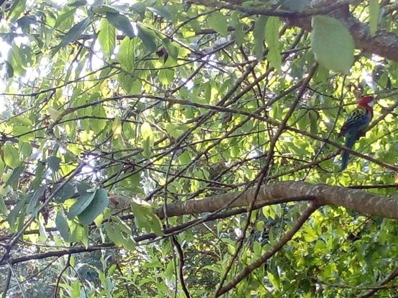 oiseaux exotiques  Img_2010