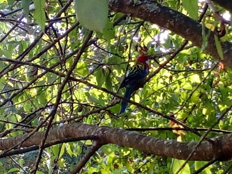 oiseaux exotiques  Img_2011