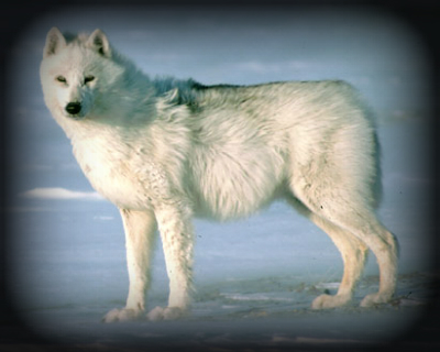 Acceptable Canine Breeds Arctic10