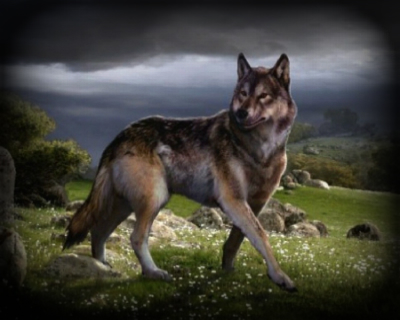 Acceptable Canine Breeds Dire_w10