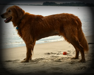 Acceptable Canine Breeds Domest10