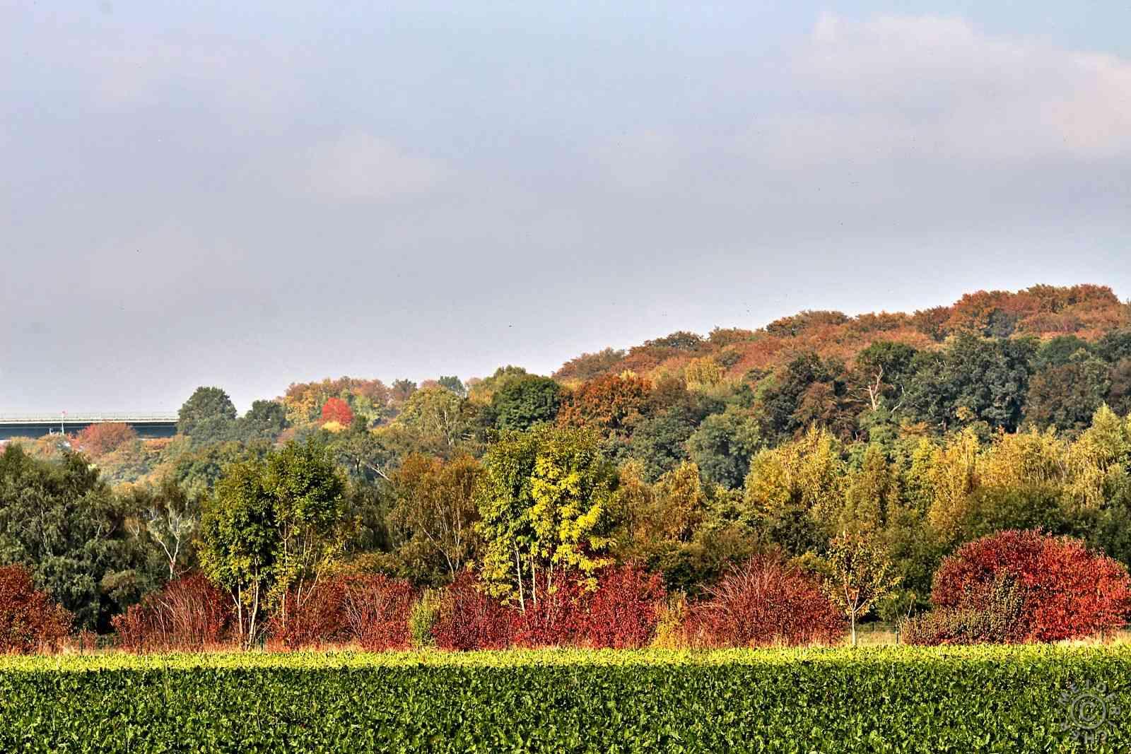 Herbstimpressionen 1511