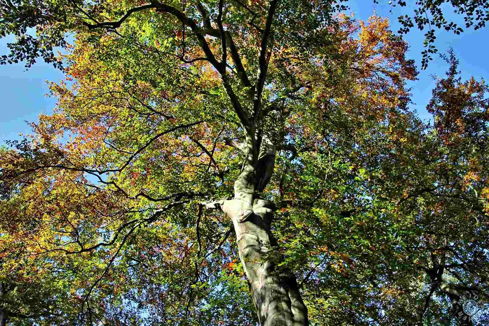 Herbstimpressionen: Sechs Seen Platte 211