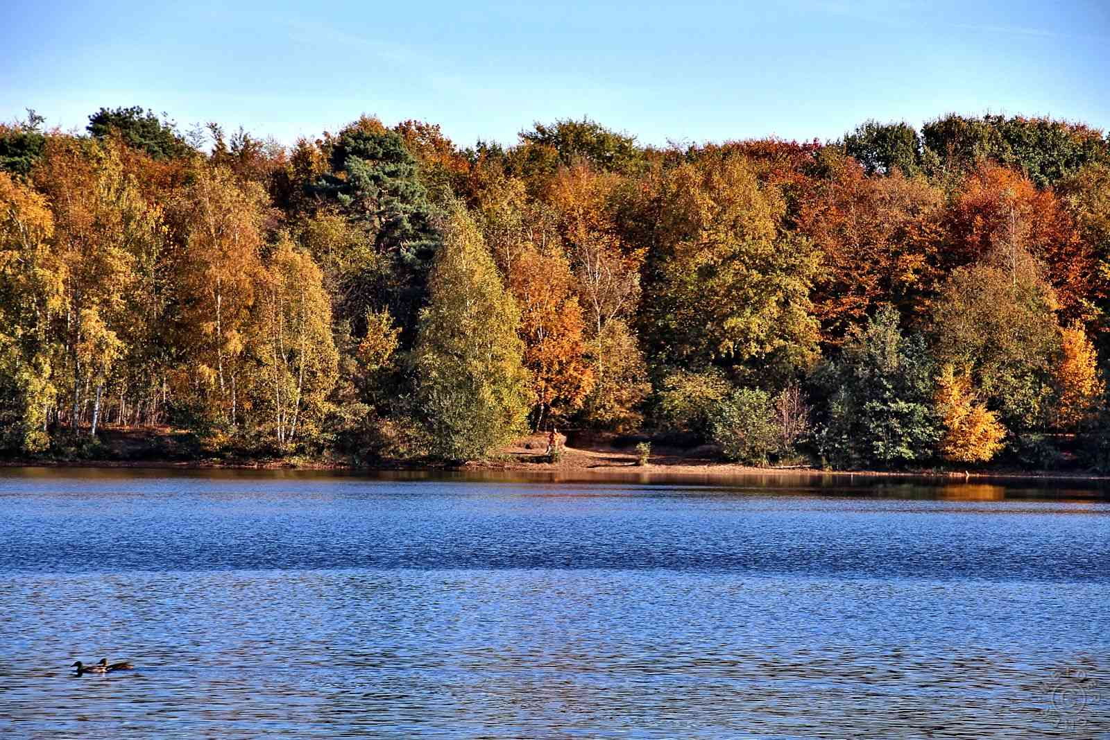 Herbstimpressionen: Sechs Seen Platte 311