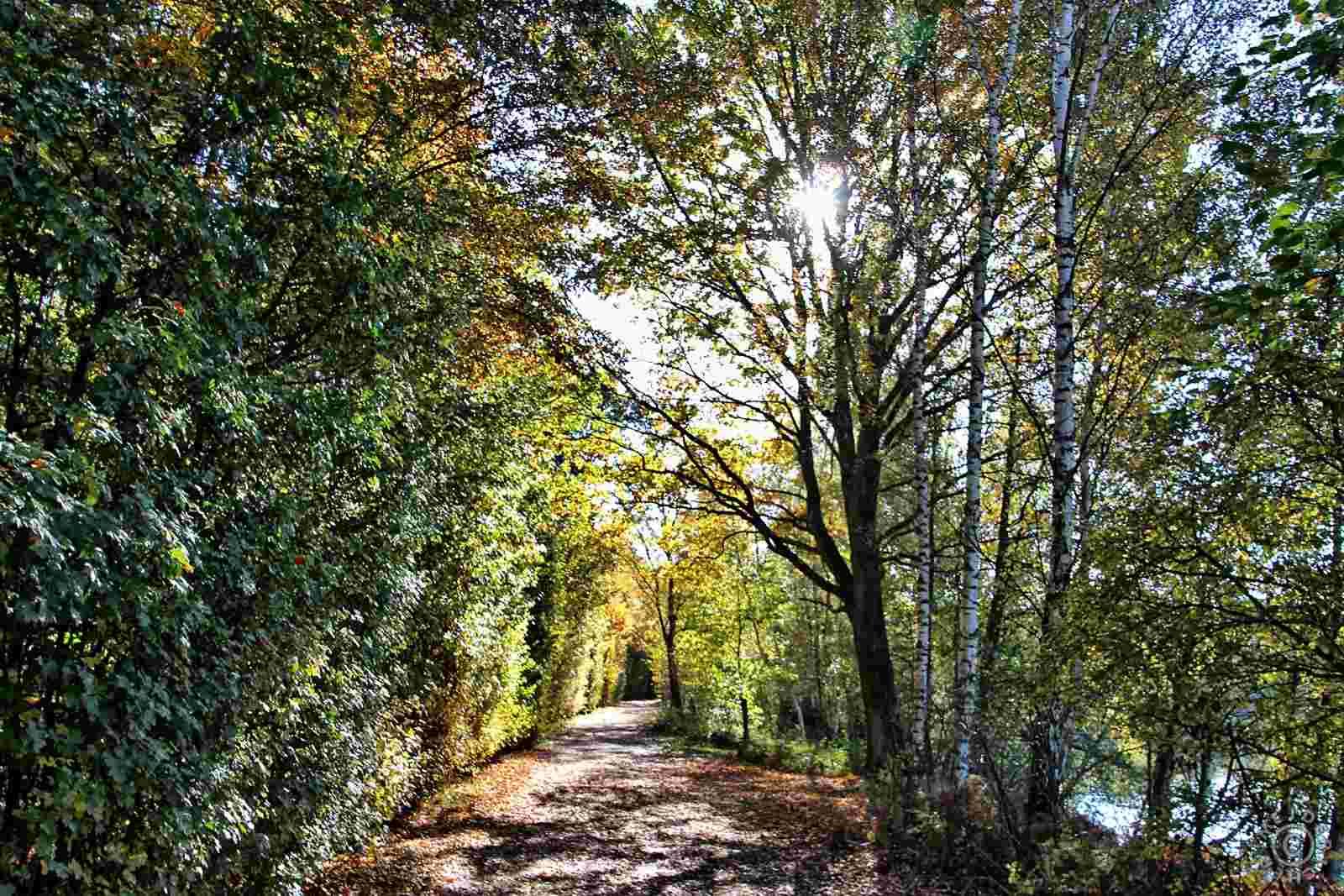 Herbstimpressionen: Sechs Seen Platte 413