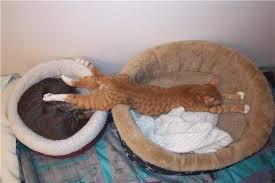Franche partie de rigolade avec nos amis les chats. 2016-112