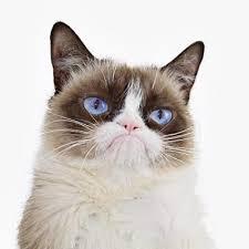 Franche partie de rigolade avec nos amis les chats. 2016-113