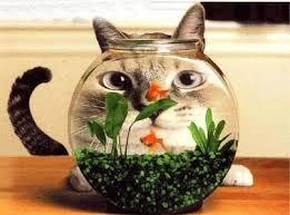 Franche partie de rigolade avec nos amis les chats. Images17