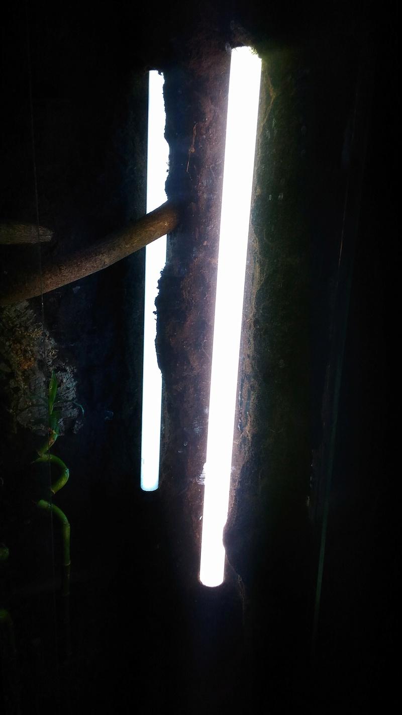 Avis sur mon terrarium  P_201610