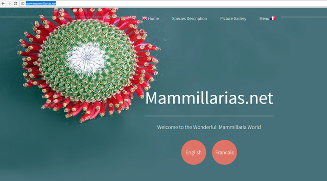 mammillarias.net Mammil10