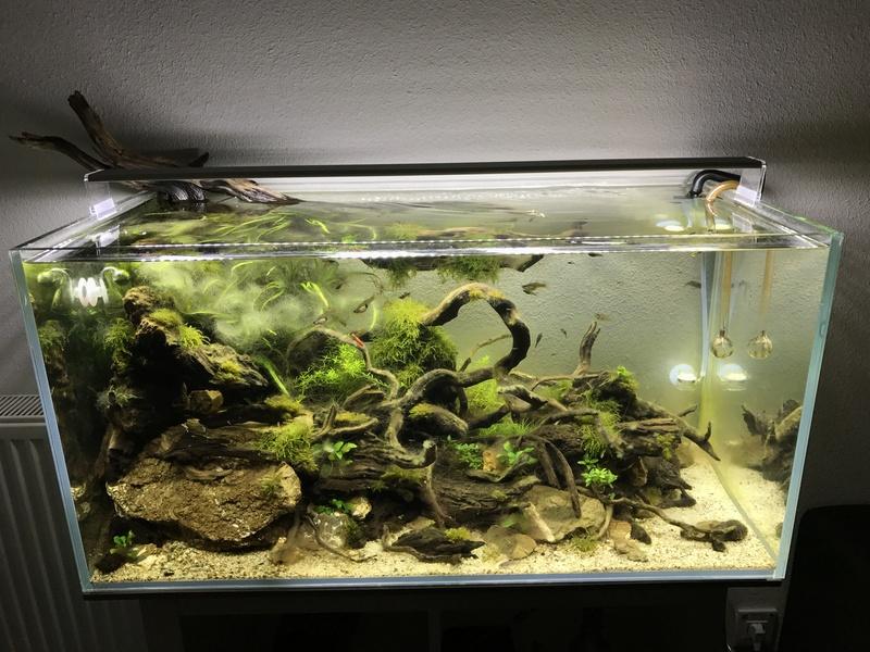 Aquarium 180L aquascapé Img_0411