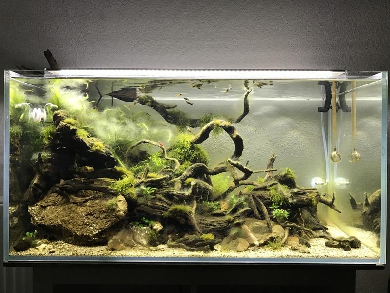 Aquarium 180L aquascapé Img_0412