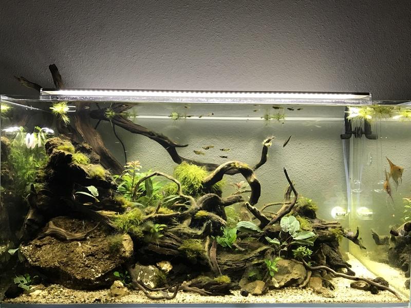 Aquarium 180L aquascapé Img_0511
