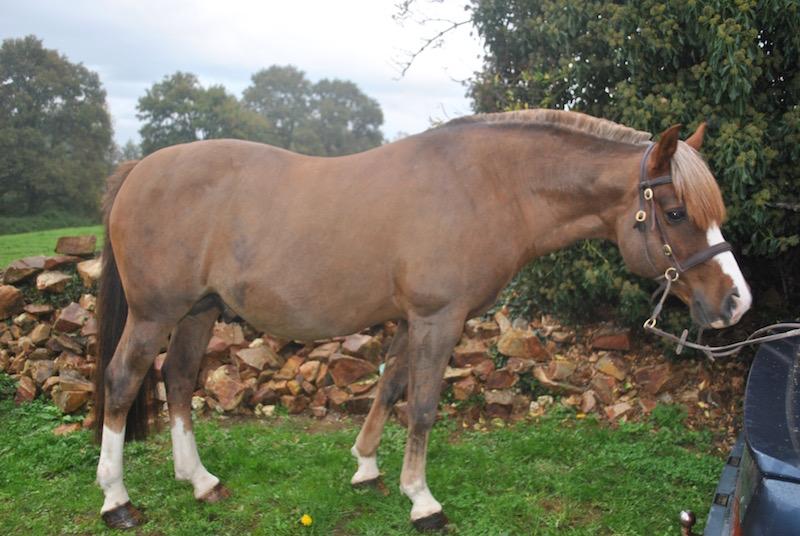 Quel poids de voiture pour un cheval ???? Dsc_0010