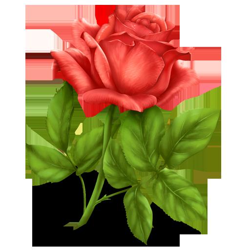 زراعة الورود Rose_p11