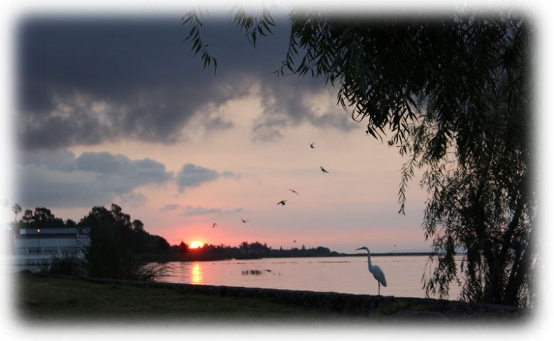 Fishing Report - Lake Chapala - Oct 24 Captur11