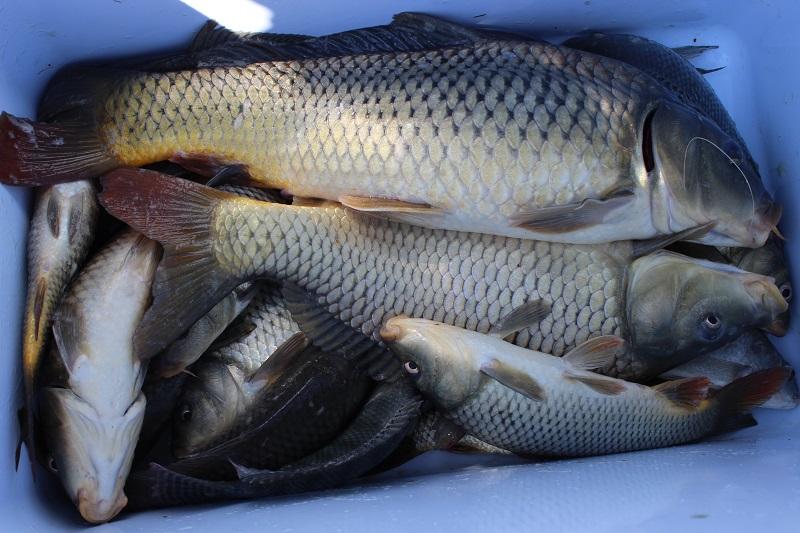 Fishing Report - Lake Chapala - 1 Nov. Img_4910