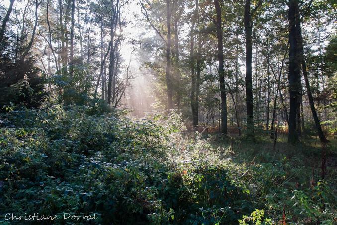 il n'y a pas que des champignons en forêt... Dsc_8012