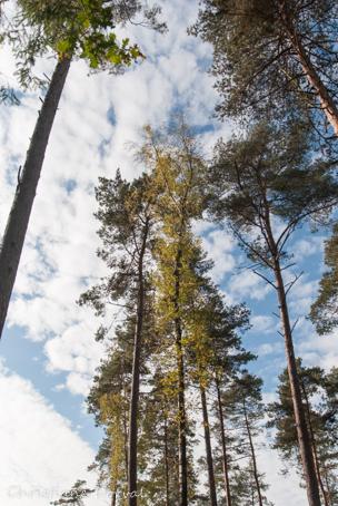 il n'y a pas que des champignons en forêt... Dsc_8113
