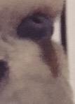 Ma perruche Mâle me mord depuis qu'ils une femelle Image16