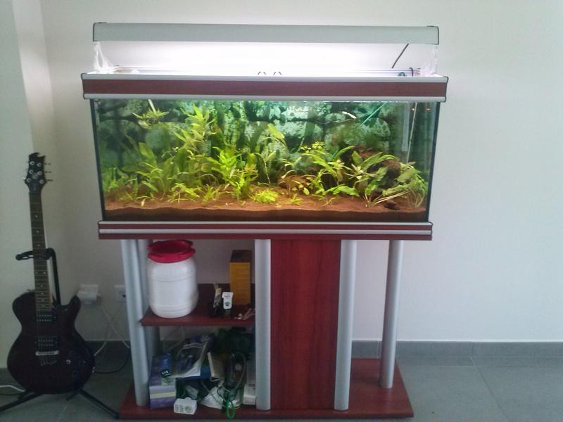Reprise de l'aquariophilie - Démarrage d'un 180 litres Cam00810