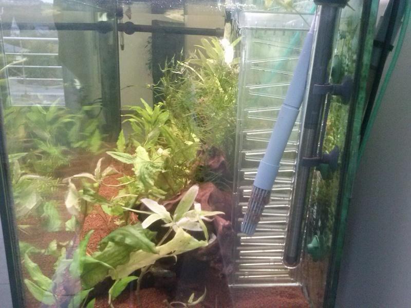 Reprise de l'aquariophilie - Démarrage d'un 180 litres Cam00813