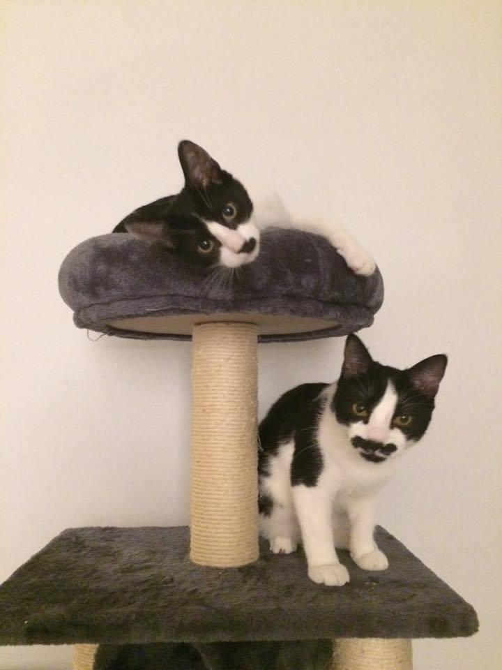 Nos amis les chats. Mousse10