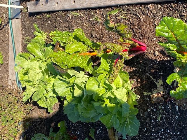 Mùa Thanksgiving thu hoạch & trồng trọt  Chad_n10