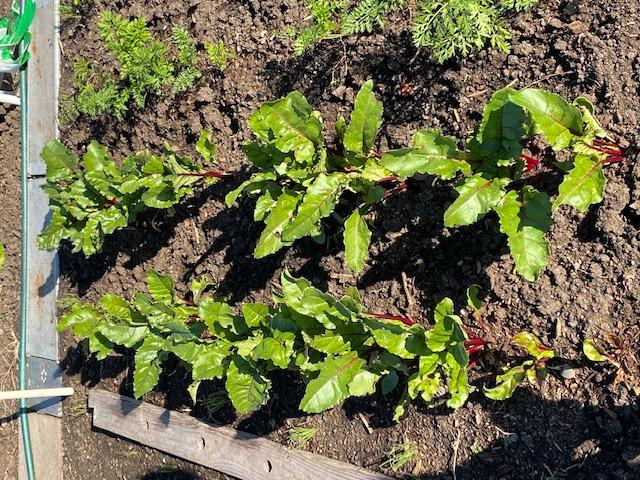 Mùa Thanksgiving thu hoạch & trồng trọt  Cu_den10