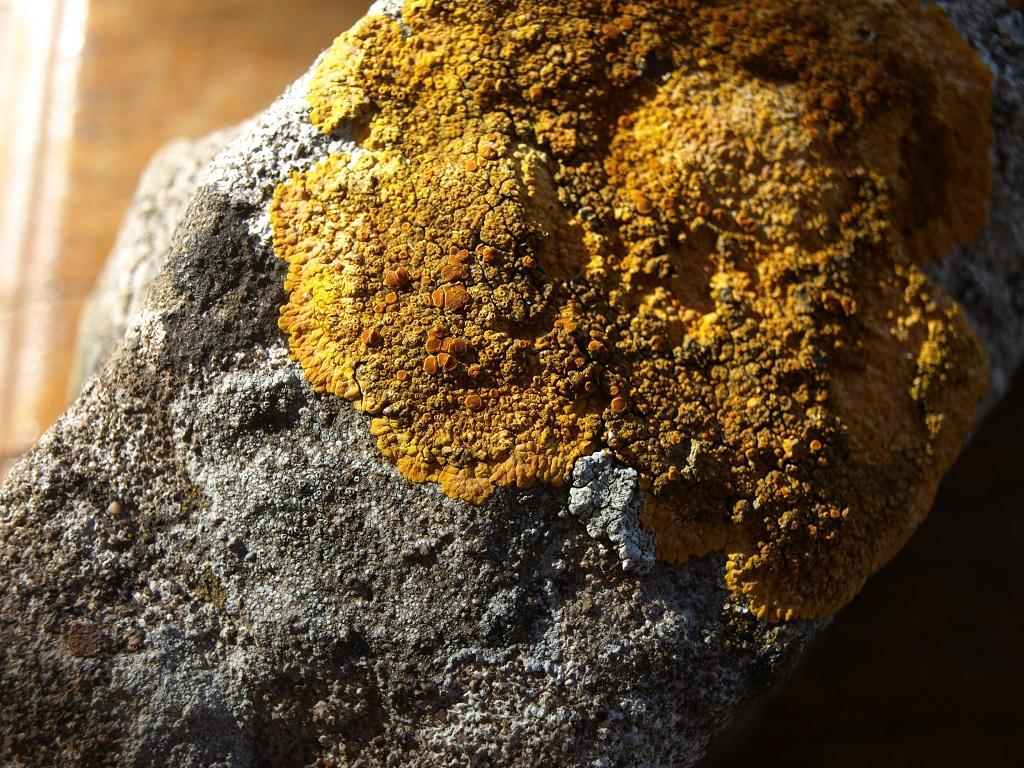 Identifier lichen 3 Aid_310