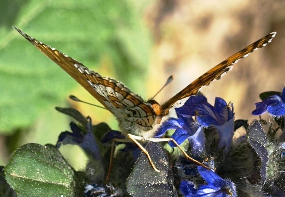 fil(et) à papillons - Page 18 Comme_10