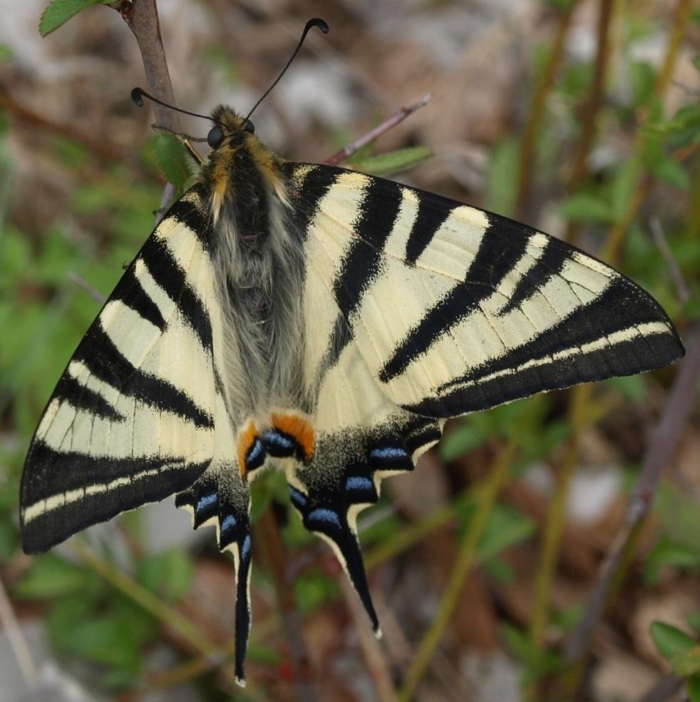 fil(et) à papillons - Page 17 Flambz10