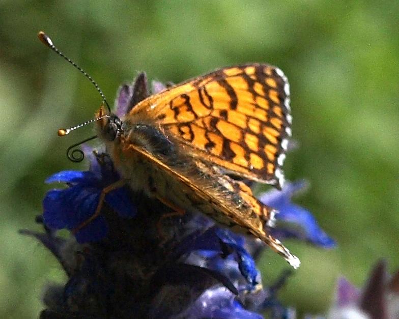 fil(et) à papillons - Page 17 Melita10