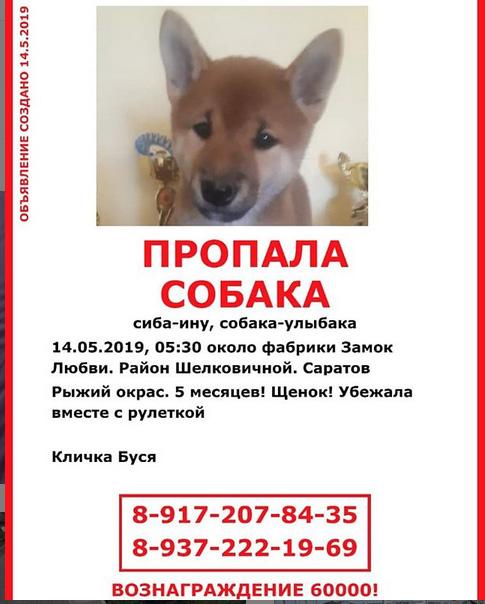 Потерялся щенок Саратов! Нужна помощь в поиске Aau10
