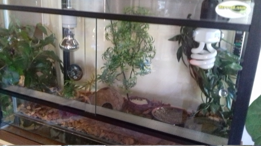 "Gecko ""denutri"" 15309710"